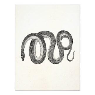 Serpiente de cristal del vintage - espacio en fotografías