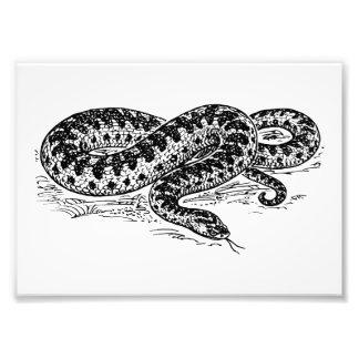 Serpiente de la serpiente impresion fotografica