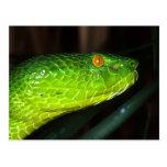 Serpiente de la víbora del hoyo de Stejneger verde Postales