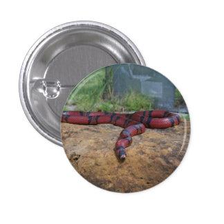 Serpiente de leche del Honduran Pin Redondo De 1 Pulgada