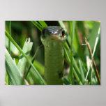 Serpiente de liga en la hierba posters