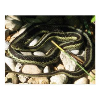 Serpiente de liga en rocas postal