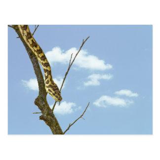 Serpiente de liga en un miembro contra un cielo az postal