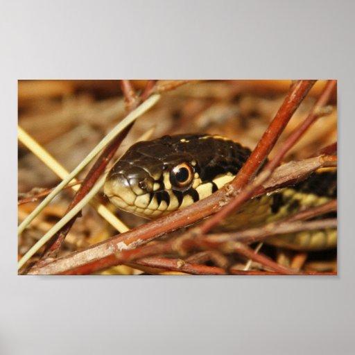 Serpiente de liga impresiones
