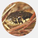 Serpiente de liga pegatinas redondas