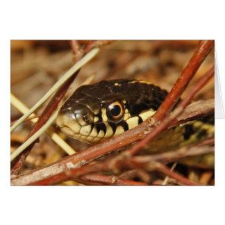 Serpiente de liga felicitación