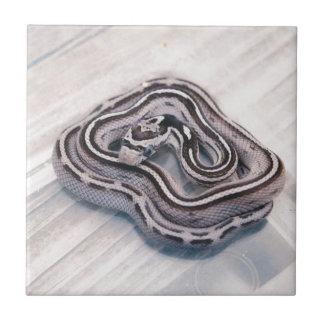 Serpiente de maíz de bebé tejas  cerámicas