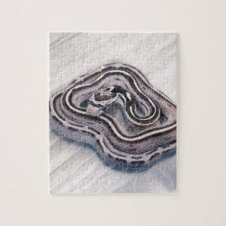 Serpiente de maíz de bebé puzzles con fotos