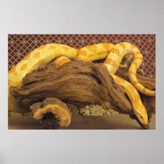 Serpiente de maíz del albino póster