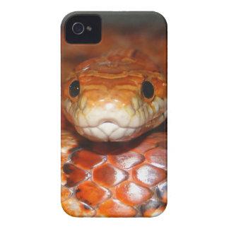 Serpiente de maíz iPhone 4 Case-Mate coberturas