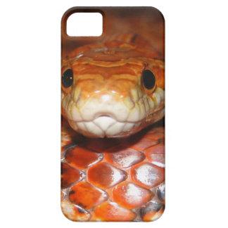 Serpiente de maíz iPhone 5 fundas