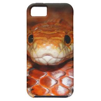 Serpiente de maíz iPhone 5 coberturas