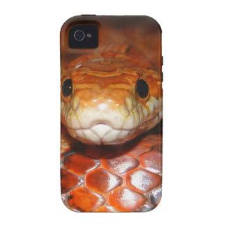 Serpiente de maíz iPhone 4/4S carcasa