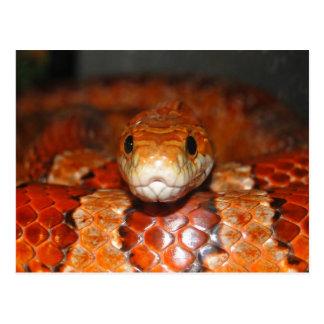 Serpiente de maíz postal