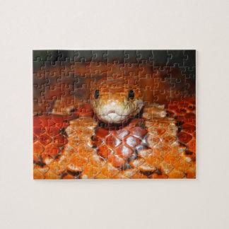 Serpiente de maíz puzzle con fotos