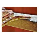 Serpiente de maíz roja Slithering Plantilla De Tarjeta De Negocio