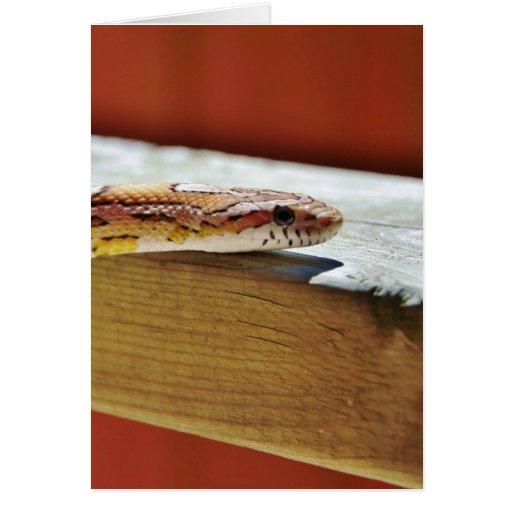 Serpiente de maíz roja Slithering Tarjeta De Felicitación