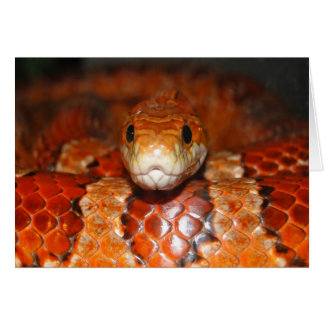 Serpiente de maíz tarjetas