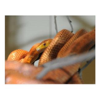 Serpiente de rata de los marismas postal