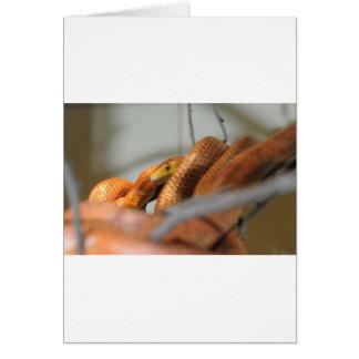 Serpiente de rata de los marismas tarjeta de felicitación