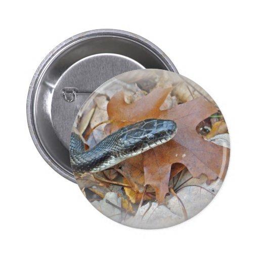 Serpiente de rata negra - obsoleta del obsoleta de pin