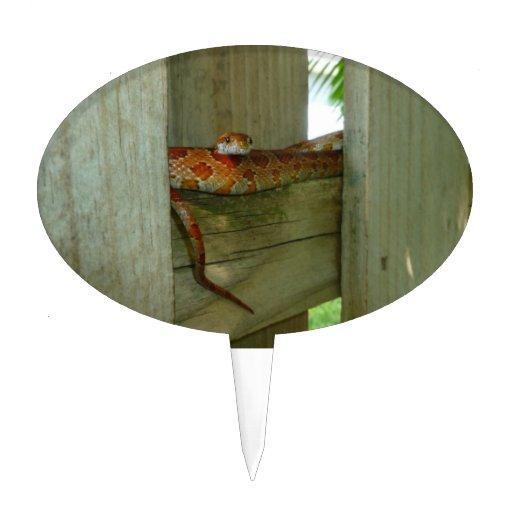 serpiente de rata roja en cabeza de la cerca para  palillos de tarta