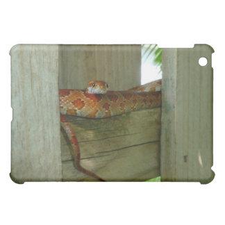 serpiente de rata roja en cabeza de la cerca para