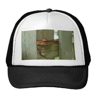 serpiente de rata roja en cabeza de la cerca para  gorros