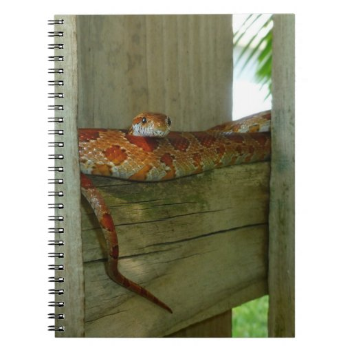 serpiente de rata roja en cabeza de la cerca para  libros de apuntes con espiral