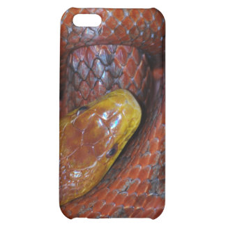 Serpiente de rata roja