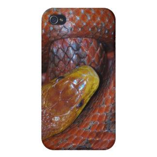 Serpiente de rata roja iPhone 4/4S carcasas