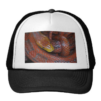 Serpiente de rata roja gorro