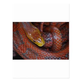 Serpiente de rata roja tarjeta postal