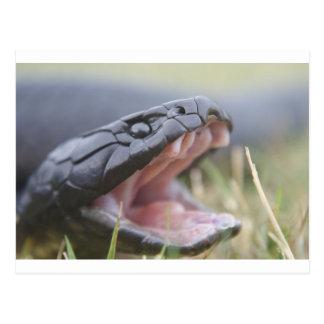 Serpiente de tigre tarjetas postales