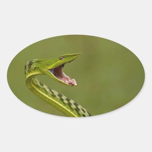 Serpiente de vid verde pegatina ovalada