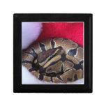 Serpiente del pitón de la bola en imagen del gorra caja de recuerdo