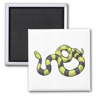 Serpiente del pitón imán cuadrado