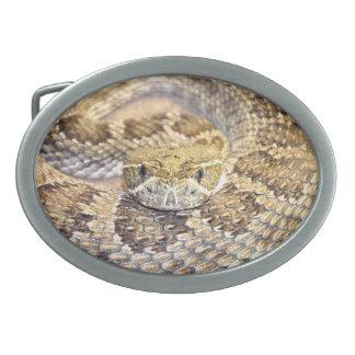 Serpiente del traqueteo de la pradera hebilla cinturón oval