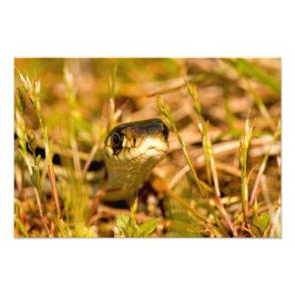 Serpiente en la hierba impresión fotográfica