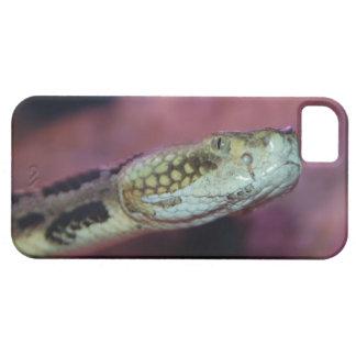 Serpiente espeluznante iPhone 5 carcasa
