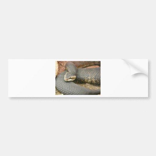 serpiente marrón pegatina de parachoque