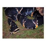 serpiente negra postal