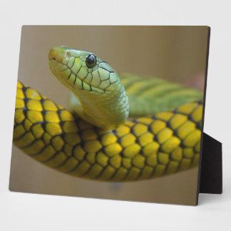Serpiente Placa De Plastico
