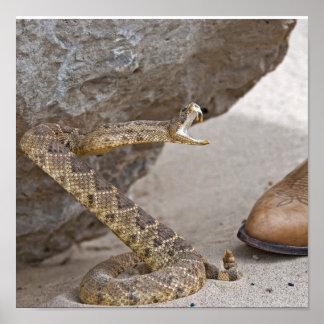 Serpiente Póster