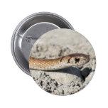 Serpiente septentrional de Brown Pin