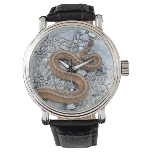 Serpiente septentrional de Brown Relojes