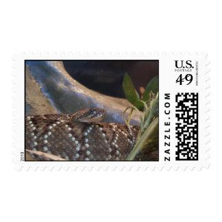 Serpiente siniestra sellos