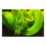 Serpiente verde áspera - poster