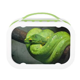 Serpiente verde en espiral del árbol