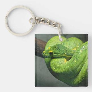 Serpiente verde en espiral del árbol llavero cuadrado acrílico a doble cara